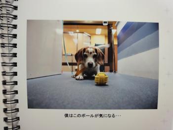 elpelp-photo16.jpg