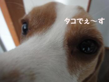 ikatako_2.jpg