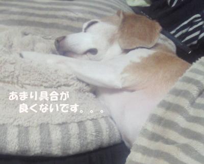 kai_01.jpg