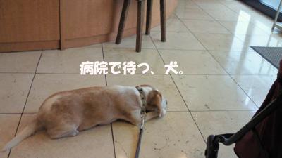 kai_05.jpg