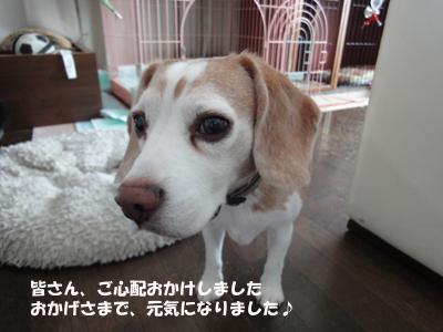 kai_5.jpg