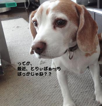 kai_boyaki.jpg
