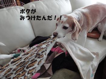 knitP10.jpg