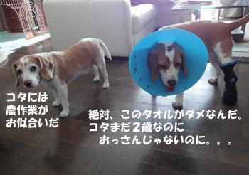 kota_sanpo3.jpg