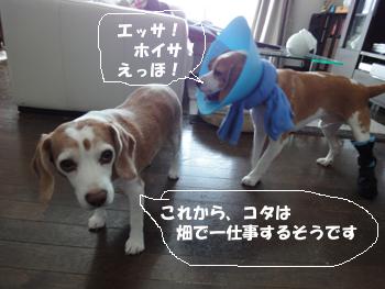 kota_sanpo4.jpg