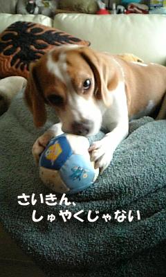 kotaro_1.jpg