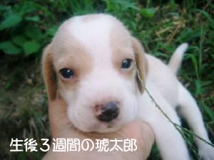 kotaro_baby.jpg