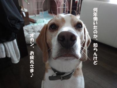 okan_11.jpg