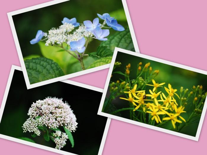 可愛い花々