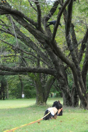 木の上にからす・・・