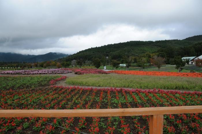 花畑には、色とりどりのお花~