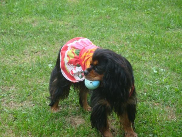 ボール取っちゃった芽衣。