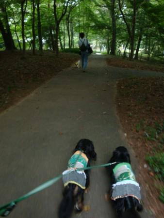 歩け、歩け~