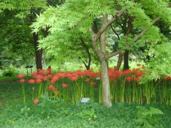 花咲き山。。