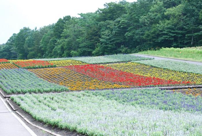 色とりどりの花畑・・・