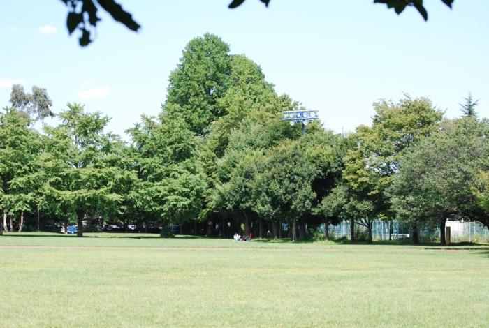 広~い公園です。