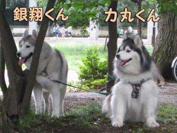 力ちゃん&銀ちゃん