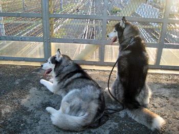 観察中の鉄犬ブラザーズ