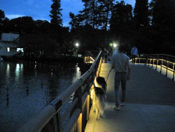 夕闇の井の頭公園