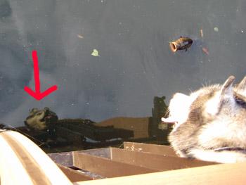 水面にもトリュフ