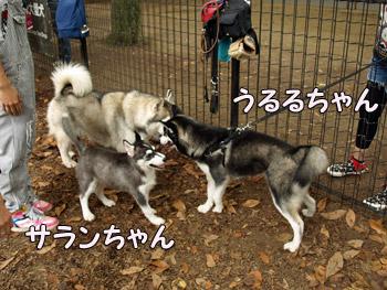 うるるちゃん&サランちゃん