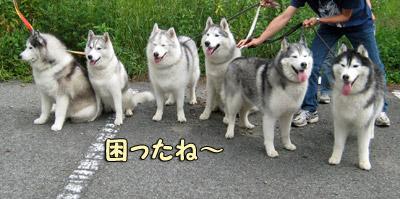 オフ会幹事犬打ち合わせ中
