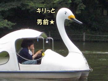 男前な白鳥ボート