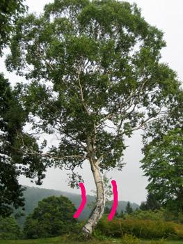 曲がった木