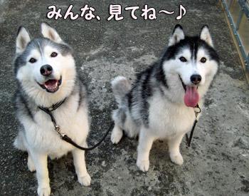 鉄犬ブラザーズ