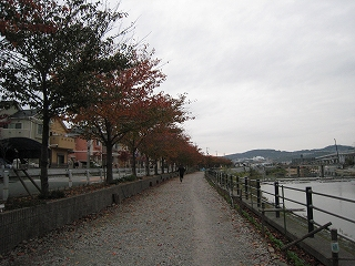 IMG_1532.jpg