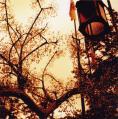 161_ガラスの森の街灯と空