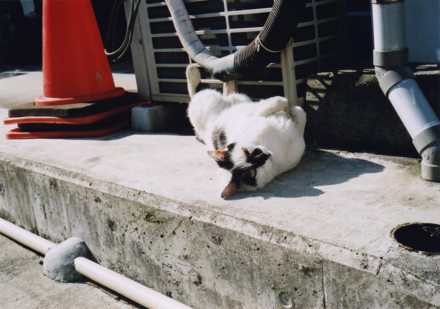 畳屋さんとこのネコ