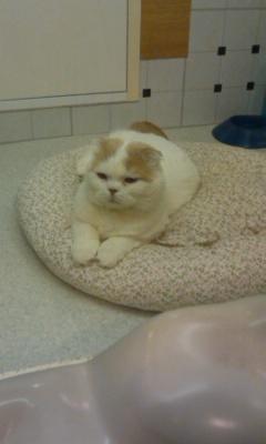 「猫だ!カフェ」のネコ03