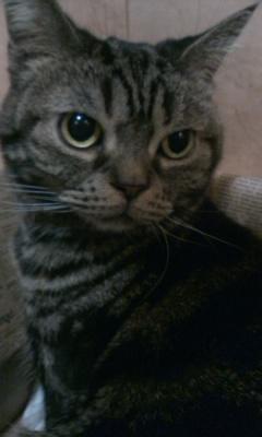 「猫だ!カフェ」のネコ01
