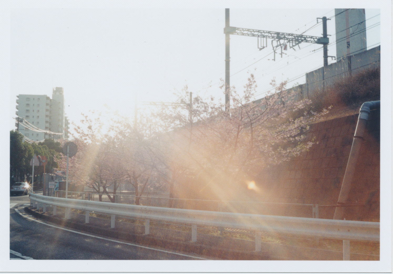 243_夕方にお散歩スタート