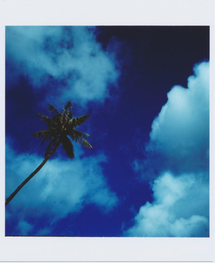 274_グアム_ヤシの木と空