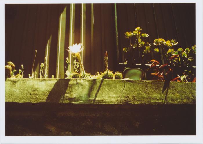 343_サボテンの花
