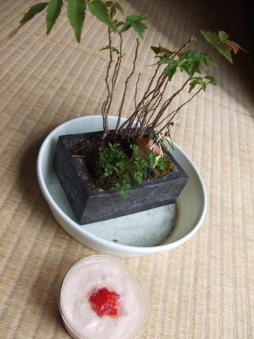 お花見スイーツと盆栽_02