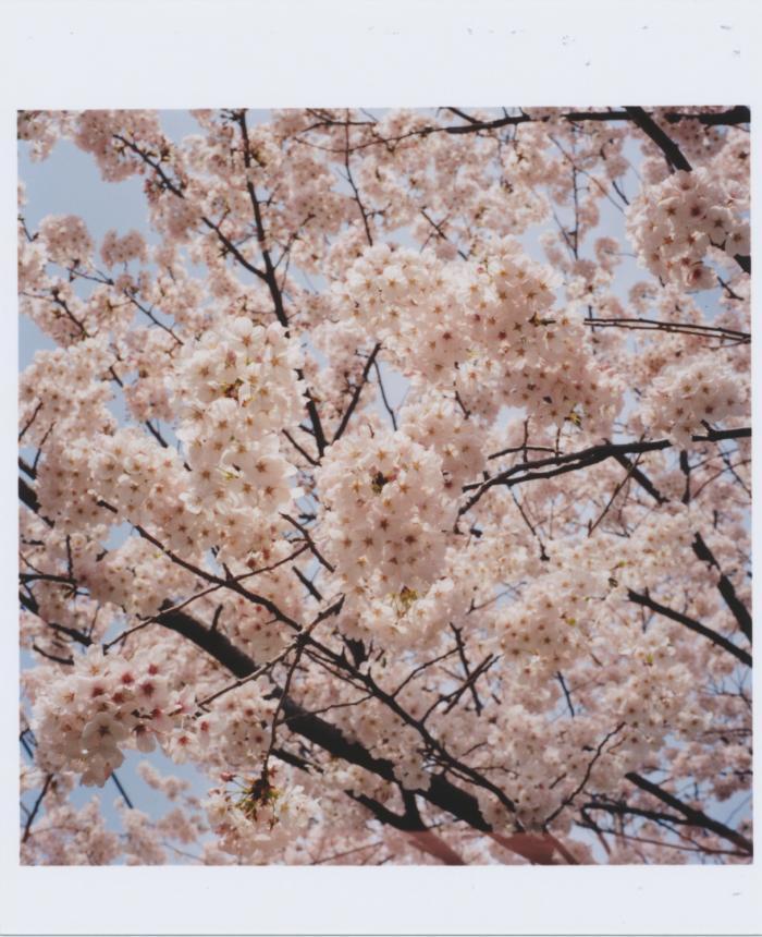 Kodak_PORTRA_400_sakura_01