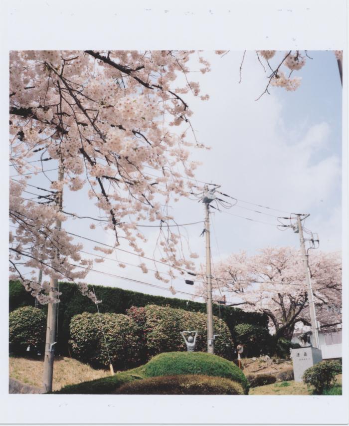Kodak_PORTRA_400_sakura_02