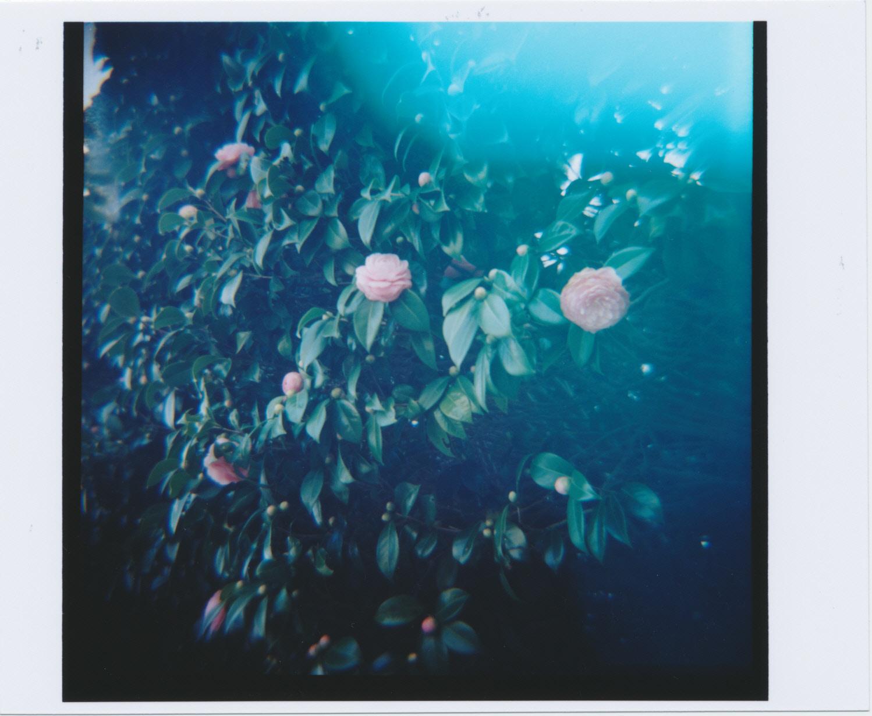 Kodak_PORTRA_400_D_0009