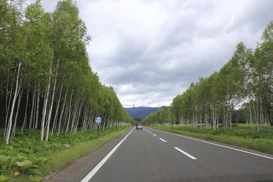 sikari_0812_3.jpg