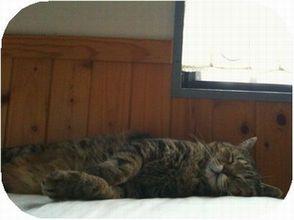 にゃあon the bed