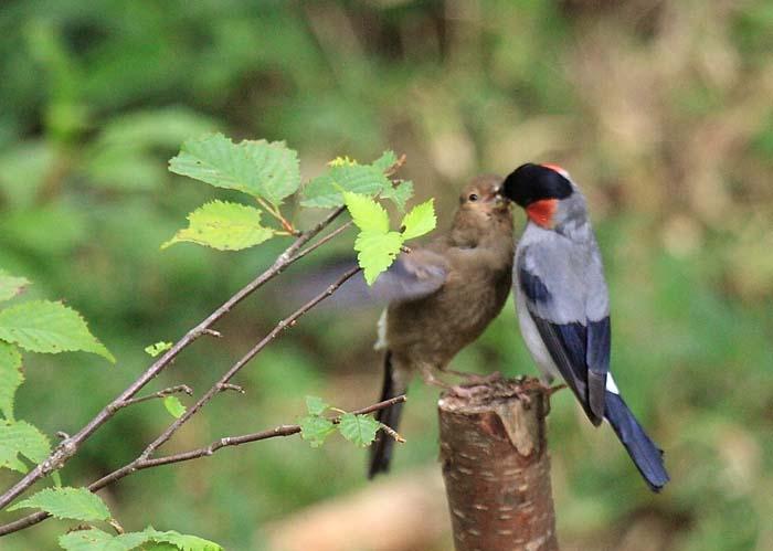 09drama_bird_09L.jpg