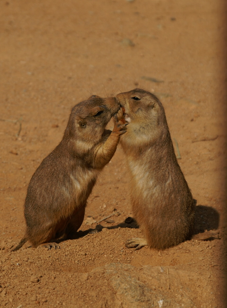 pu-kiss.jpg