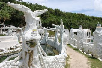 20110808_サンゴ畑