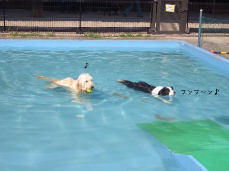 泳ぎの上手なボダさん