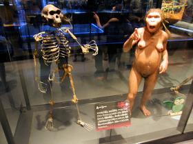 アファール猿人の女性(国立科学博物館)
