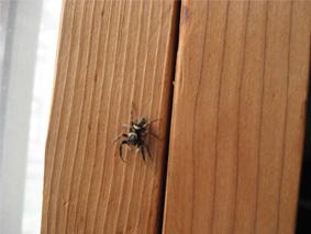 跳び蜘蛛君