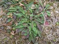 きれぎれの風採 「ロゼット植物」1-6